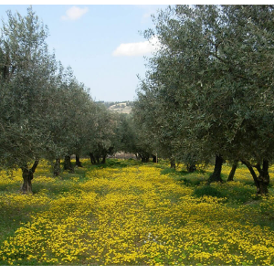 Carte cadeau –  Voyage au pays de l'olivier